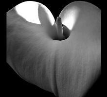 Calla Lily Black&White by christazuber