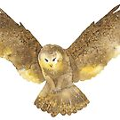 Beautiful barn owl flying, hovering, hunting watercolour winter design  by Sandra O'Connor
