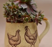 Hen and Chicks and Rooster too. by mychickens