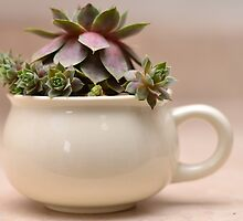 Coffee Cup with Hen and Chicks by mychickens