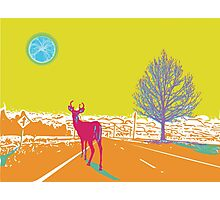 Deer in the headlights lithograph Photographic Print
