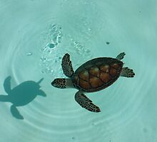Turtle by benny89del