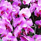 Orchids by Rebel Way Design