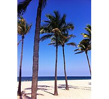 Palm Trees in the Sand Photographic Print