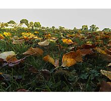 low leaf Photographic Print
