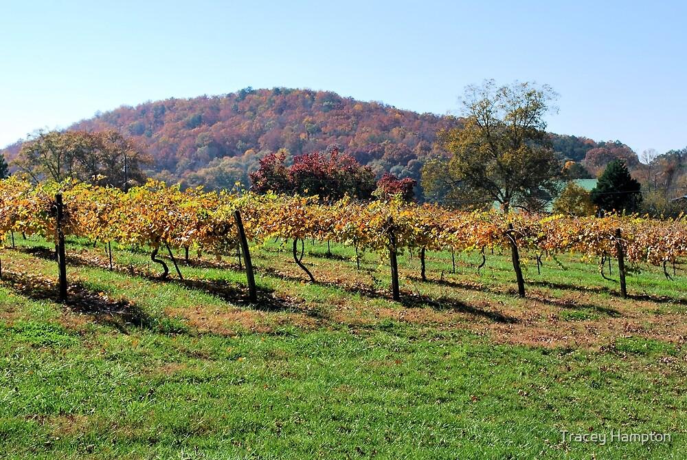 White Oak Vineyard by Tracey Hampton