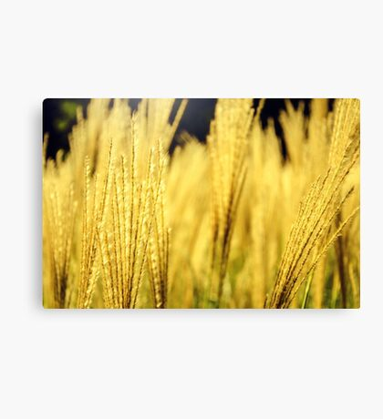Golden Tall Grass Canvas Print