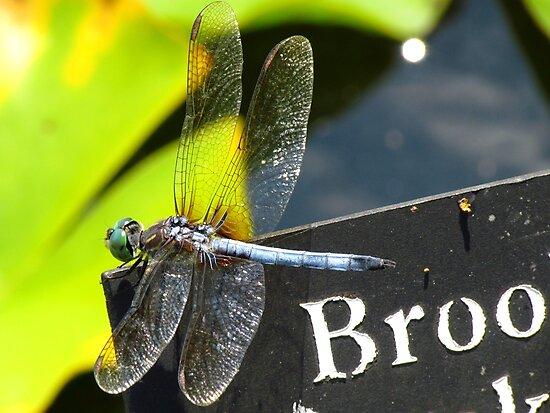 Dragonfly by Alberto  DeJesus