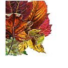 Fall Leaves by Cameron Hampton