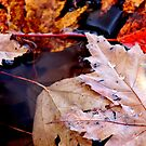 Leaf Litter on the Water by Kathleen Daley