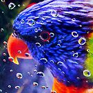 RainBow Lorikeet by ShotsOfLove