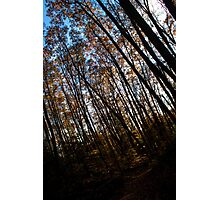Darkness in the Forest Photographic Print