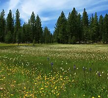 A Meadow In Lassen County by James Eddy