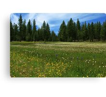 A Meadow In Lassen County Canvas Print