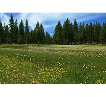A Meadow In Lassen County Photographic Print
