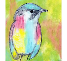 Rainbow Bird Posing Photographic Print