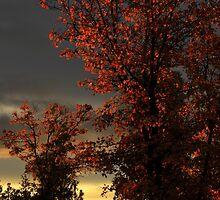 Autumn's First Light by James Eddy