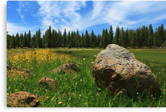 Different Boulder Same Springtime by James Eddy
