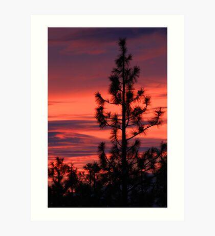 Pine Tree Sunrise Art Print