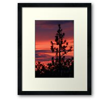 Pine Tree Sunrise Framed Print