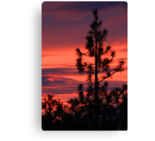 Pine Tree Sunrise Canvas Print