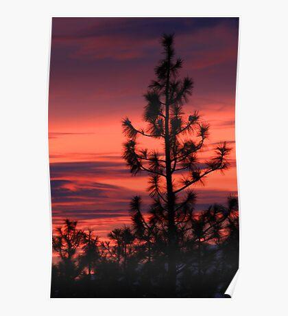 Pine Tree Sunrise Poster