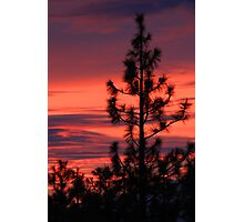 Pine Tree Sunrise Photographic Print