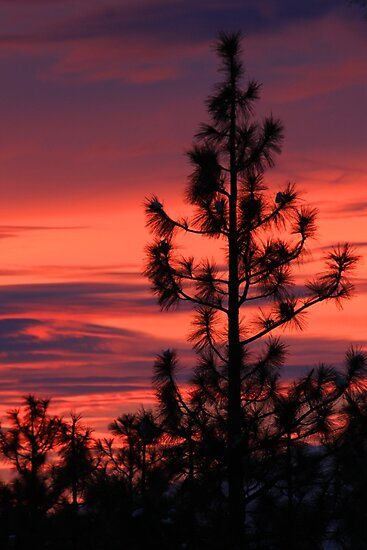 Pine Tree Sunrise by James Eddy