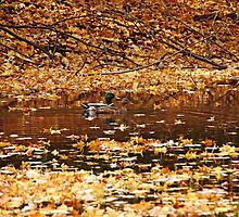 Autumns Mallards by Debbie Oppermann