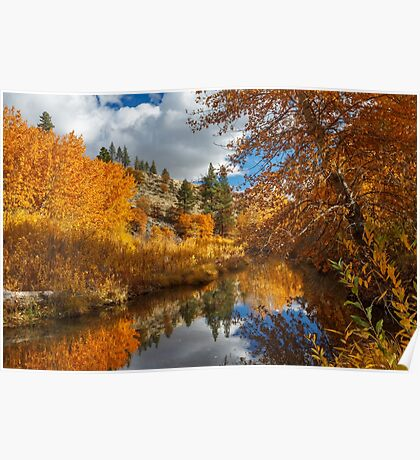 Susan River Reflections Poster