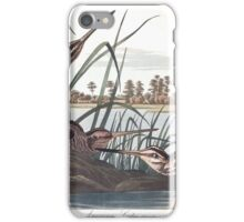American Snipe, by John Audubon iPhone Case/Skin