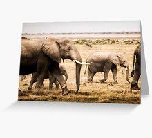 Pachy Parade - Amboseli NP, Kenya Greeting Card