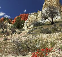 Red Flowers At Red Rock Canyon by James Eddy