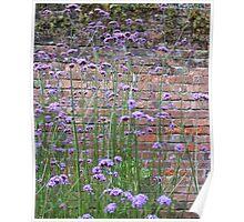 Purple Flower Background Poster