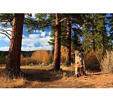 Ponderosa Path Photographic Print
