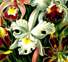 ORCHID FLOWER GARDEN; Vintage Art Print Sticker