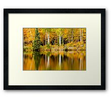 White Birch Trees Reflections in Autumn Framed Print