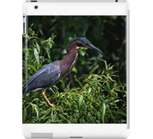 Green Heron iPad Case/Skin