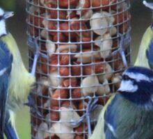 Blue tit trio Sticker