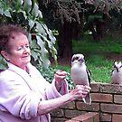 Kookaburras visiting for breakfast. by Bev Pascoe