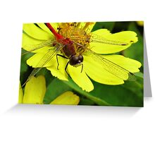 Meadowhawk Red on Yellow Greeting Card