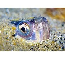 Buried Sandfish is watching you!  Photographic Print