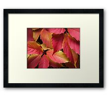 Autumn's colour palette Framed Print