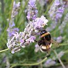 Edinburgh Bumblebee by Richard Winskill