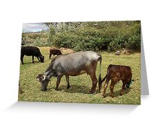 Cows in a Farmers Pasture Greeting Card