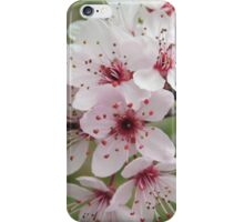 Spring Blossoms #2  iPhone Case/Skin