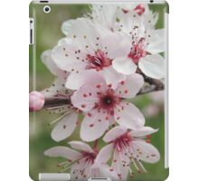 Spring Blossoms #2  iPad Case/Skin