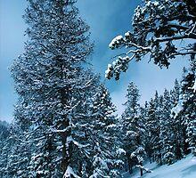 Winter Wonderland by BravuraMedia