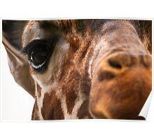 Watching You! #Giraffe  Poster