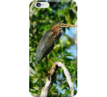 Green Heron on the Scuppernong iPhone Case/Skin